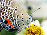 Fisheye grand angle 2 en 1 et objectif macro avec clip universel_